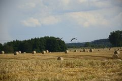 Haystacks in a field. Round haystacks on a green field Royalty Free Stock Photos