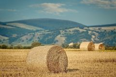Haystacks on the Field. Rural Landscape with Haystacks on the Field Royalty Free Stock Photo