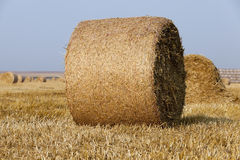 Haystacks in a field of straw Stock Image