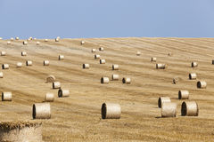 Haystacks in a field of straw Royalty Free Stock Photos