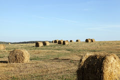 Haystacks in a field of straw Stock Images