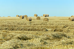 Haystacks in a field of straw Stock Photography