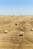 Haystacks in a field of straw Royalty Free Stock Photography