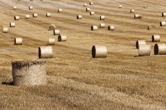 Haystacks in a field of straw Royalty Free Stock Photo