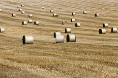 Haystacks in a field of straw Royalty Free Stock Images