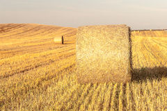 Haystacks in the field Royalty Free Stock Photos