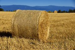 Haystacks in the fields Stock Photo