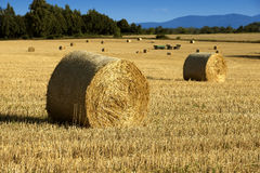 Haystacks in the fields Stock Photography