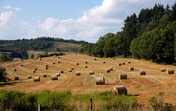 Haystacks in French countryside Stock Image