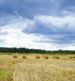Haystacks on the grain field after harvesting Stock Photos
