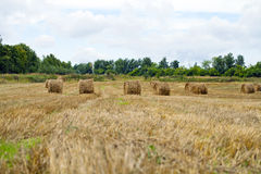 Haystacks on the grain field after harvesting Stock Image