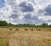Haystacks on the grain field after harvesting Royalty Free Stock Photos