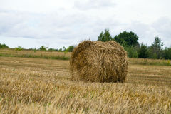 Haystacks on the grain field after harvesting Royalty Free Stock Photography