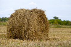 Haystacks on the grain field after harvesting Royalty Free Stock Images