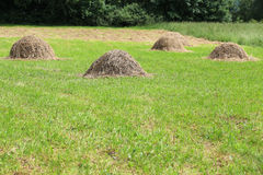 Haystacks on the grass background, countryside landscape Stock Images