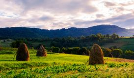 Haystacks on the grassy field in mountains. Lovely summer scenery of rural area in the morning Royalty Free Stock Images