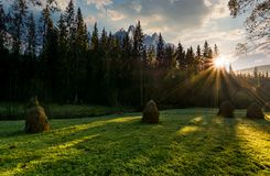 Haystacks on the forest meadow in High Tatras. Haystacks on the grassy forest meadow in High Tatra mountains. Beautiful rural scenery composite in Slovakia at Royalty Free Stock Photography