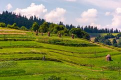 Haystacks on grassy slopes in rural area. Lovely agricultural scenery in summertime Royalty Free Stock Photography