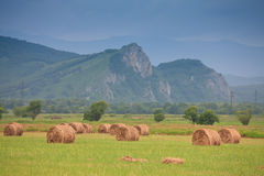 Haystacks on a green field Royalty Free Stock Photo