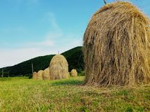 Haystacks and green grass on hillside. Agricultural field in mountain area. Beautiful countryside rural landscape on sunny day. stock photo