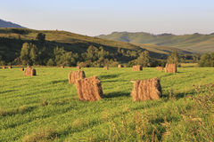 Haystacks on green lawn in the mountains Royalty Free Stock Photo