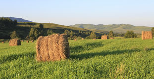 Haystacks on green lawn in the mountains Stock Image