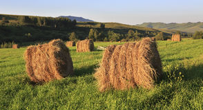 Haystacks on green lawn in the mountains Royalty Free Stock Image