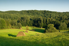 Haystacks on green meadow Royalty Free Stock Images