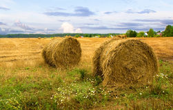 Haystacks after harvest Stock Photo