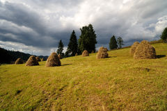 Haystacks in the meadow Royalty Free Stock Images