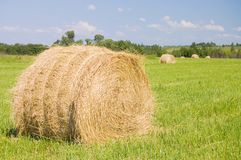Haystacks harvest against the skies Royalty Free Stock Photos