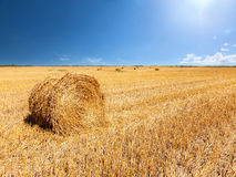 Haystacks after the harvest of wheat Royalty Free Stock Photos