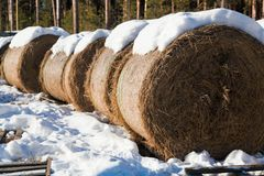 Haystacks i śnieg Obraz Stock