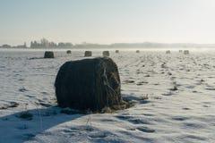 Haystacks i ziemi uprawnej pole zima rankiem Zdjęcie Stock