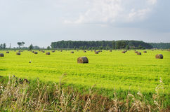 Haystacks on the land. Royalty Free Stock Images