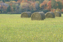 Haystacks lying on the autumn grass in New England Royalty Free Stock Photography
