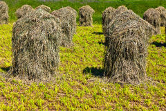 Haystacks on a meadow Stock Photography