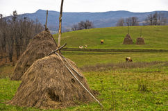 Haystacks on a meadow for cow pasture Royalty Free Stock Photos