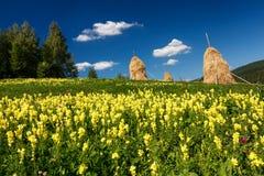 Haystacks in a meadow with flowers. Haystacks in a meadow with yellow flowers Royalty Free Stock Photo