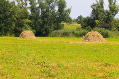 Haystacks on the meadow Royalty Free Stock Photography
