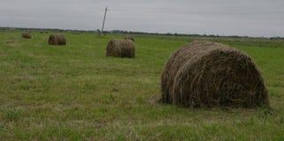 Haystacks on the meadow. Haystacks, hay for the winter Stock Photo