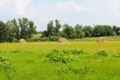 Haystacks on the meadow. Haystacks on the green meadow Royalty Free Stock Photo