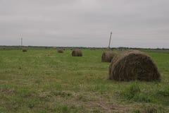 Haystacks on the meadow. Haystacks, hay for the winter Stock Photos