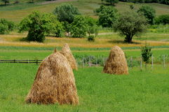 Spring landscape. Haystacks in a green meadow Stock Photos