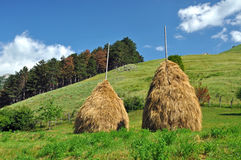 Haystacks in a meadow, rural countryside Stock Photo