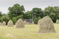Haystacks on a meadow. In Small village Roznow in Malopolska, Poland royalty free stock image