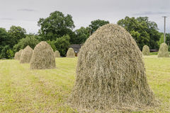 Haystacks on a meadow. In Small village Roznow in Malopolska, Poland stock photo
