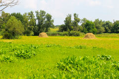Haystacks on the meadow. Summer landscape Royalty Free Stock Images