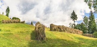 Haystacks on a meadow on a sunny day. Countryside panorama with a bunch of haystacks on green meadow, surrounded by trees, under a blue sky with white clouds, on Stock Photo