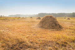 Haystacks on the meadow Royalty Free Stock Photo